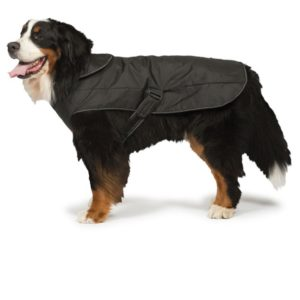Coats For A Harness