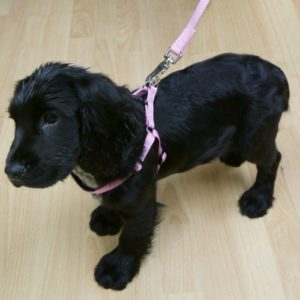 Classic Soft Protection Harness Pink Xsml