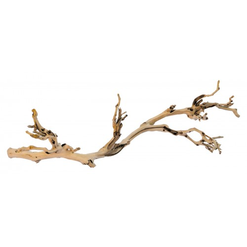 Exo Terra Forest Branch Small