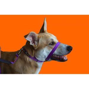 Canny Collar Purple Size 4