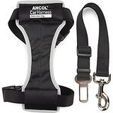 Travel & Exercise Harness Large